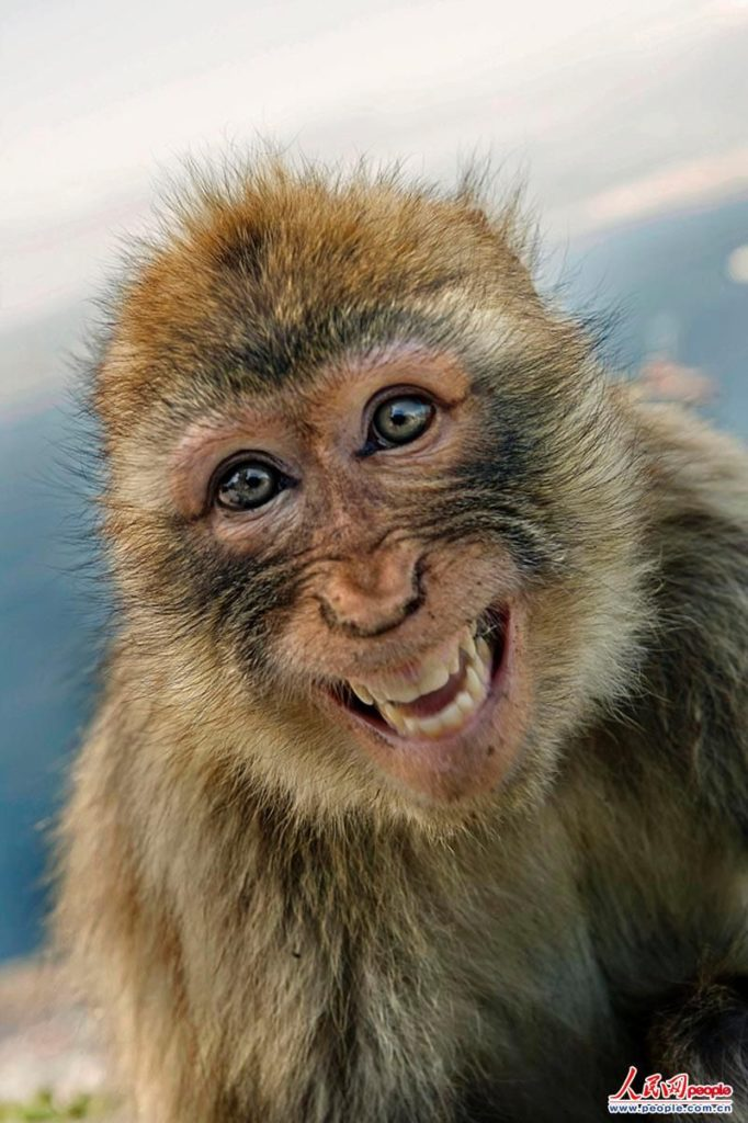 Happy Animal's faces to Brighten Your Day!