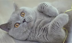 FUNNY #CatFacts You may Never Know about them!