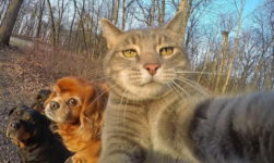 Selfies with the Boys from MANY the Cat & Dog Friends!