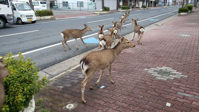 Animals taking Over a Cities during LockDown