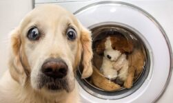 👍 Best Funny Dogs Photos🐶